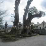 境内神木大クス(樹齢約200年)